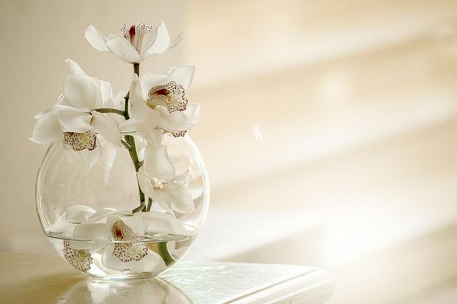 Ako pestovať orchideu – skvelé rady, ako sa starať o túto krásnu kvetinu